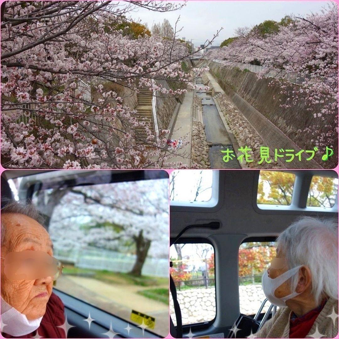 『お花見ドライブ』