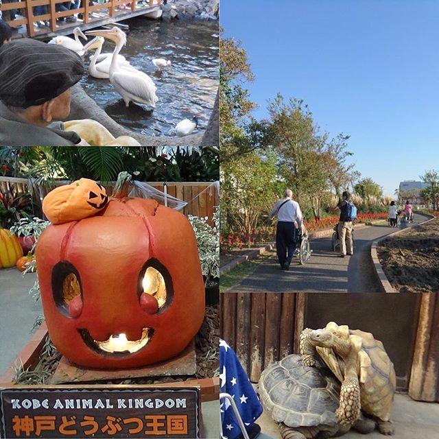 10月29日秋晴れの日に動物王国に行ってきました。